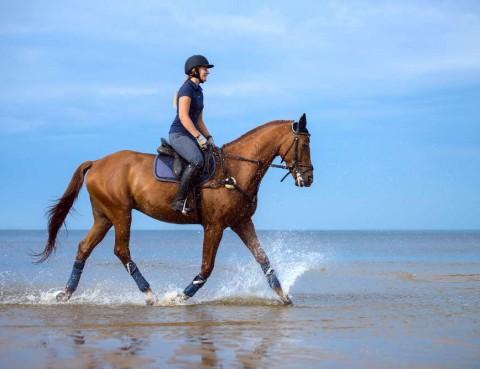 Horseriding Photo